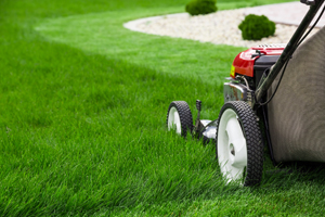 3 Qualities of Professional Lawn Maintenance_image1