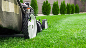 See Our Checklist for Lawn Care_image1