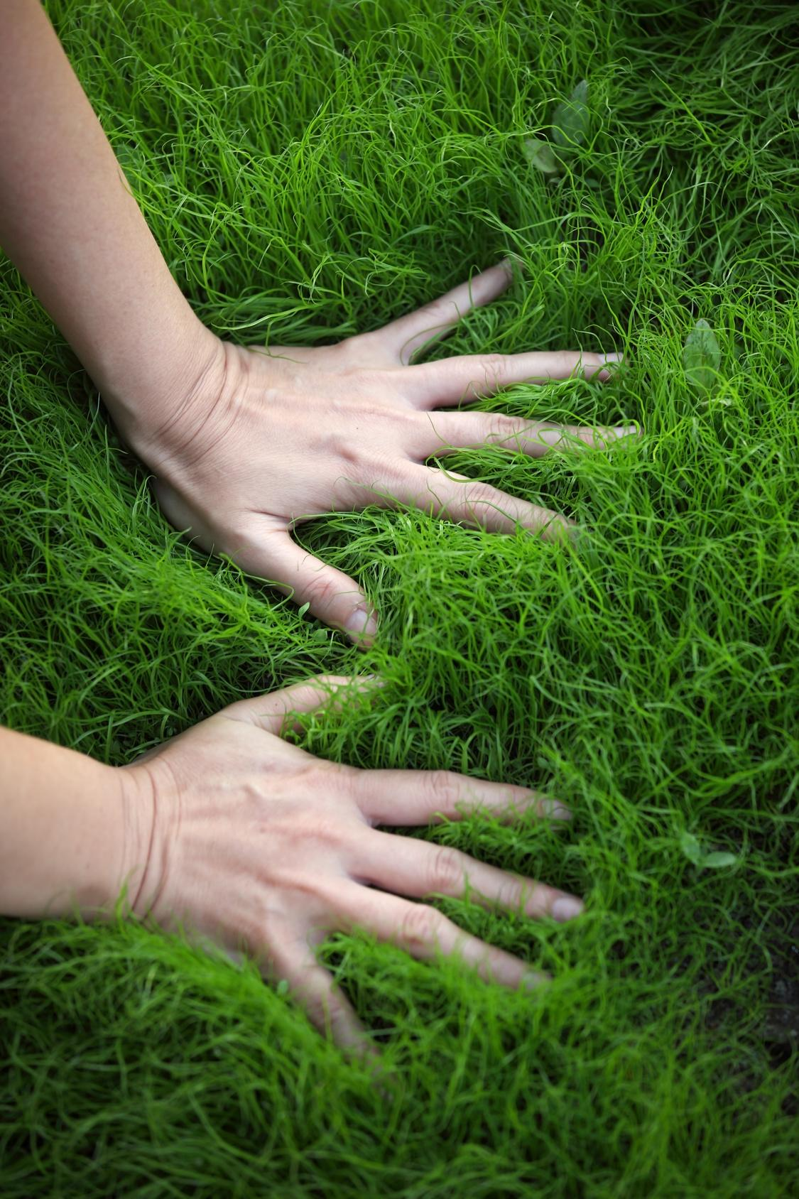 Best Lawn Maintenance Tips For A Healthy And Beautiful Lawn